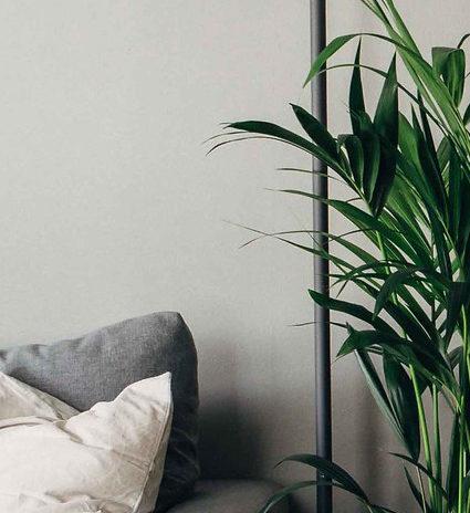 Uutta ilmettä olohuoneeseen viherkasvilla